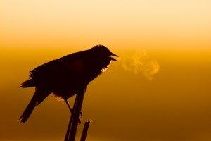 NeilLosin_Blackbird_sRGB