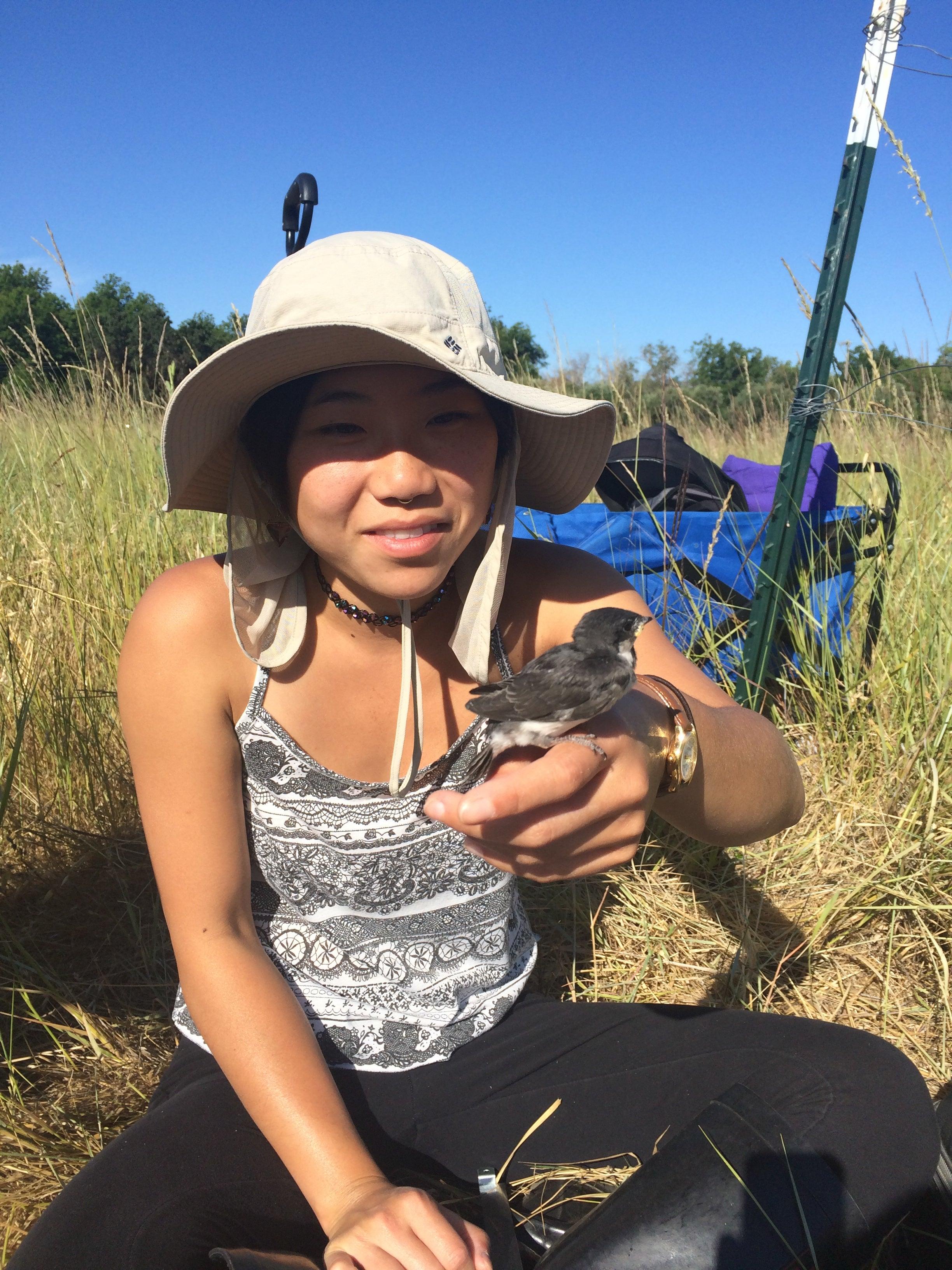 Patricelli Lab undergrad Lauren Poon working with Alli Injaian on tree swallows