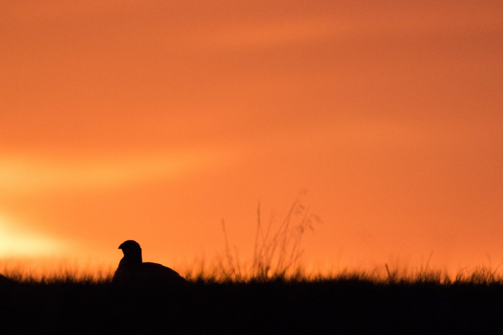 Sunrise on Chugwater, 2016