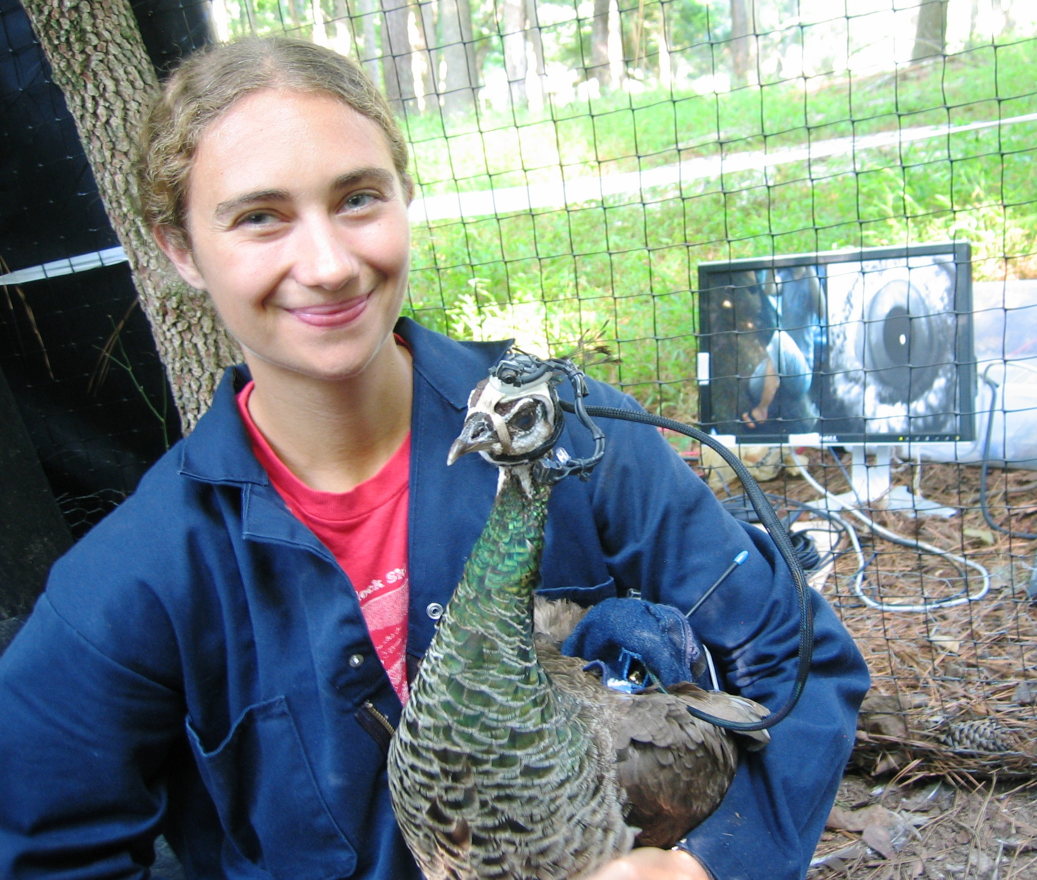 Jessica Yorzinski with her peahen eye-tracker