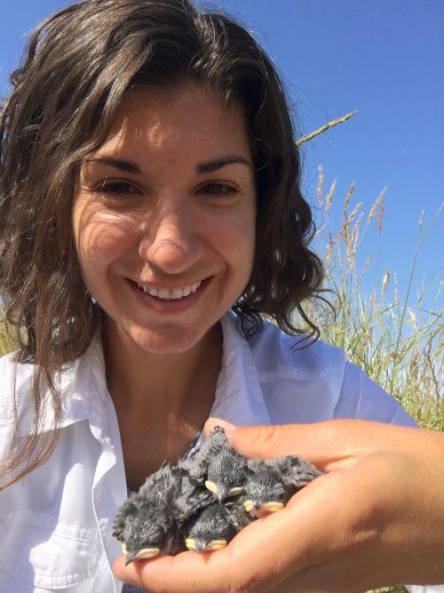 Allison Injaian with tree swallow nestlings, 2015